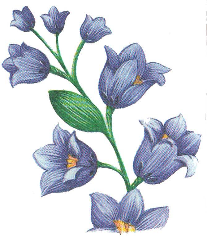Цветы из бумаги колокольчити фото 4