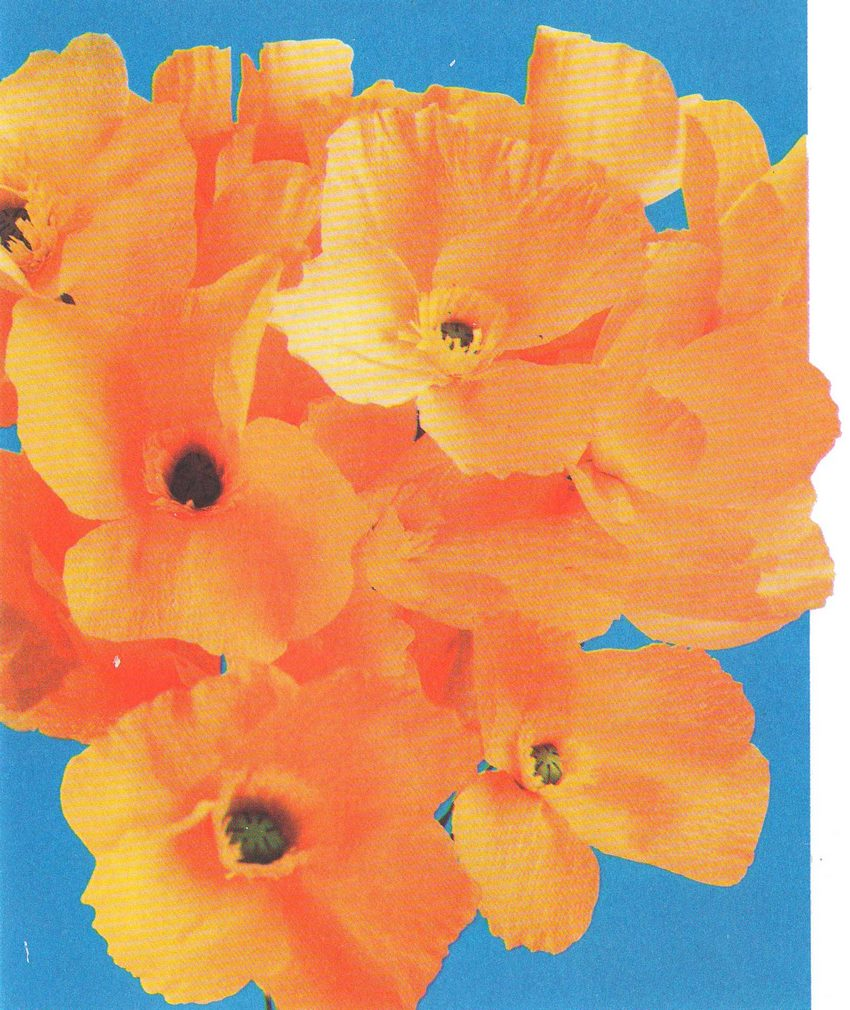 Цветы из бумаги маки фото