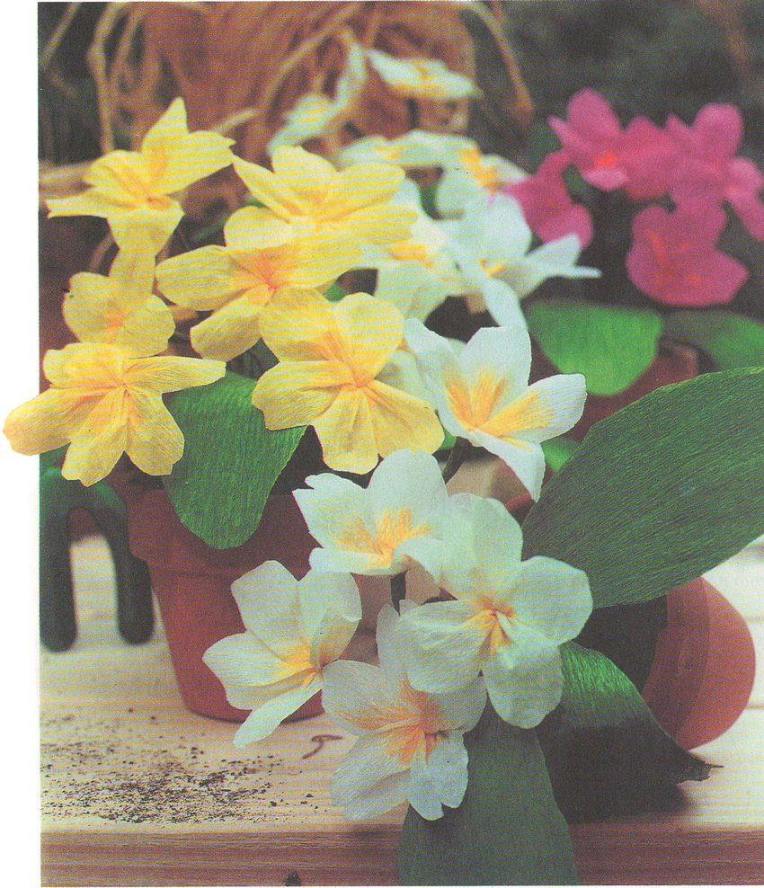 Цветы из бумаги Примулы