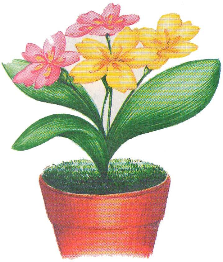 Цветы из бумаги Примулы фото 3