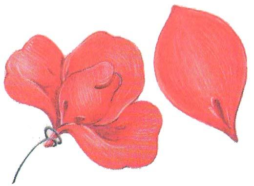 Цветы из бумаги: бутоны роз фото 3