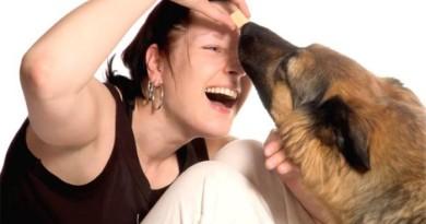 Правила поведения с собаками
