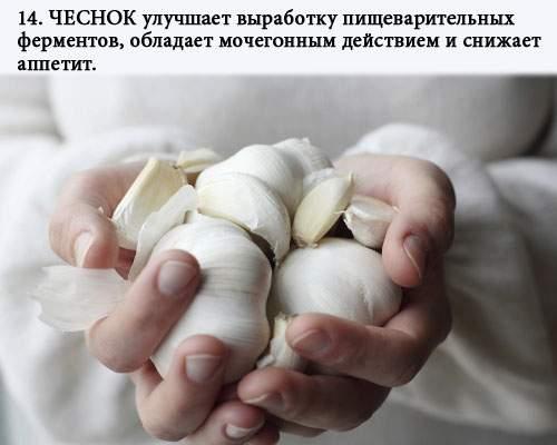 zhiroszhigateli_14